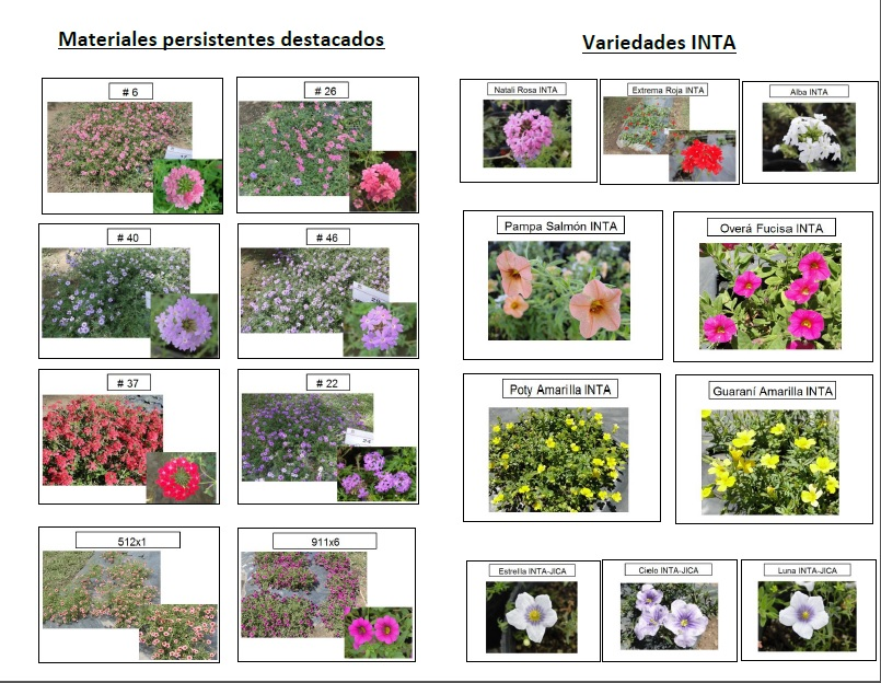 Nativas ornamentales for 10 nombres de plantas ornamentales